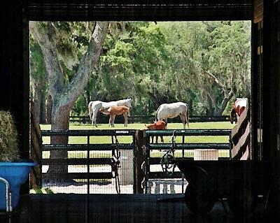 Farm Photograph - Through The Barn Door by Kim Bemis