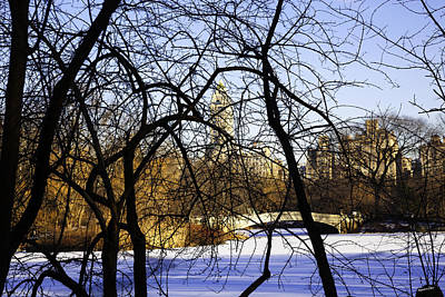 Through The Branches 3 - Central Park - Nyc Print by Madeline Ellis