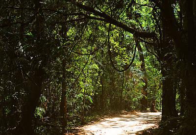 Through The Jungles Print by Jenny Rainbow