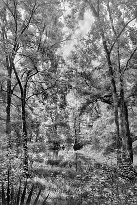 B Photograph - Through The Trees by Howard Salmon