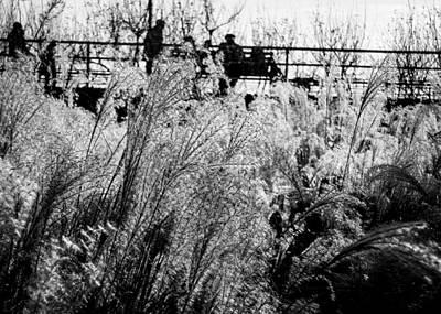 Through The Winter Grasses Print by Jon Woodhams