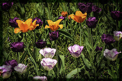 Beauty Photograph - Thru Tulip Colored Glasses by LeeAnn McLaneGoetz McLaneGoetzStudioLLCcom