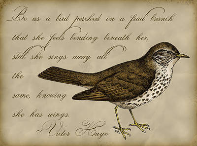 Sparrow Digital Art - Thrush Bird Wall Art by Christy Beckwith