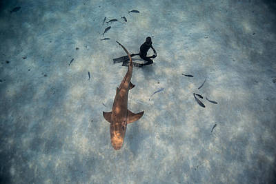 Nurse Shark Photograph - Tiburon Limon by One ocean One breath