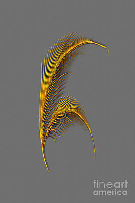 Tickle Feathers Print by Tina M Wenger