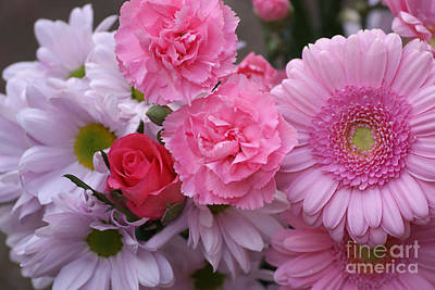Pink Carnation Photograph - Tickled Pink  by Carol Lynch