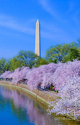 Tidal Basin And Washington Monument With Cherry Blossoms Vertical Original by Jeff at JSJ Photography