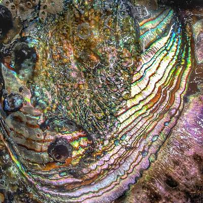 Abalone Photograph - Tide And Time by Casey Rasmussen White