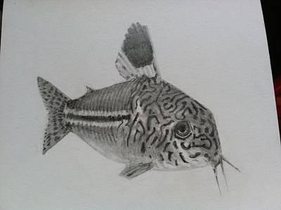 Catfish Drawing - Tiff's Cory Catfish by Tyson  Kidder