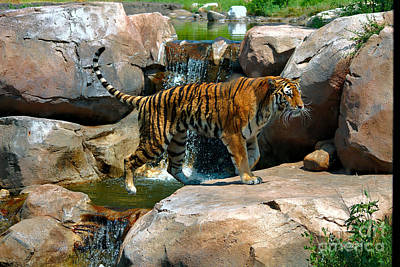 Tiger And Waterfall Print by Jeremy Linot