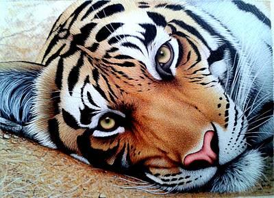Ap Painting - Tiger Face by Sabir Ali