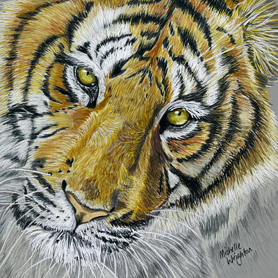 Tiger Drawing - Tiger Painting by Michelle Wrighton