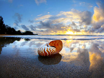 Tiger Nautilus Sunrise Print by Sean Davey