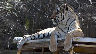 Tiger Print by Sandra Silva