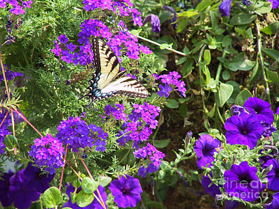 Butterfly Photograph - Tiger Swallowtail Butterfly With Purple Wave Petunias And Verbena by Conni Schaftenaar