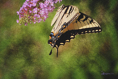 Tiger Swallowtail-featured In Photography And Textures And Harmony-happiness Groups Print by EricaMaxine  Price