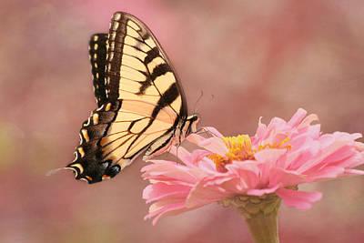 Tiger Swallowtail In The Pink Print by Kim Hojnacki