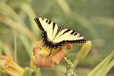 Tiger Swallowtail Print by Kim Hojnacki
