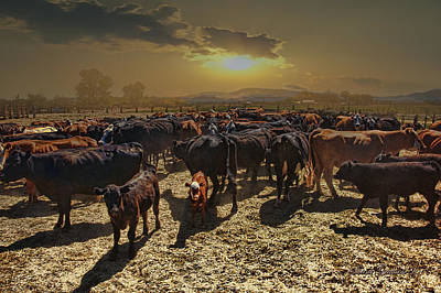 Cattle Drive Digital Art - Till The Cows Come Home by Diane  Graham