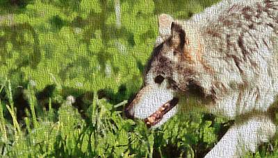 Wolves Mixed Media - Timber Wolf Portrait On Canvas by Dan Sproul