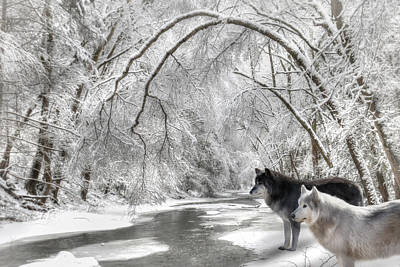 Canines Digital Art - Timber Wolves by Lori Deiter