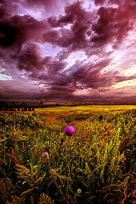 Thistles Photograph - Time And Again by Phil Koch
