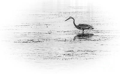 Wading Bird Photograph - Time For Fast Food by Marvin Spates