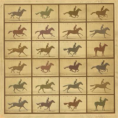 Time Lapse Motion Study Horse Muted Print by Tony Rubino