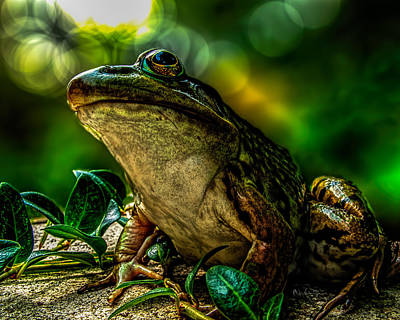 Bullfrog Photograph - Time Spent With The Frog by Bob Orsillo