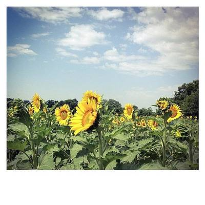 Sunflowers Photograph - Time To Get Started. #sunflowers by Terry Rowe