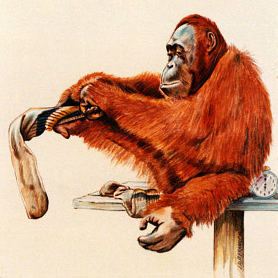 Orangutan Painting - Time To Go by John Lautermilch