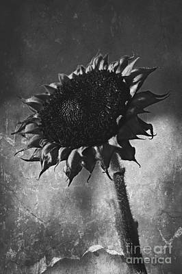 Black And White Photograph - Time To Say Goodbye by Clare Bevan