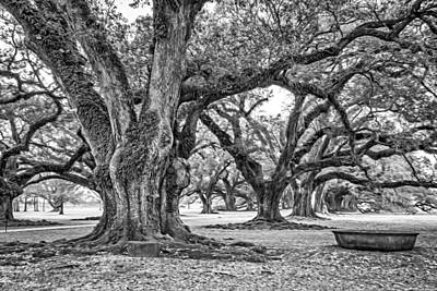 Tree Roots Digital Art - Time Travel Oil Bw by Steve Harrington