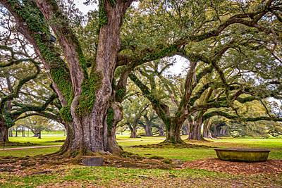 Tree Roots Digital Art - Time Travel Oil by Steve Harrington