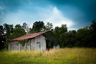 Tin Roof...ivy Covered Barn Print by Shane Holsclaw
