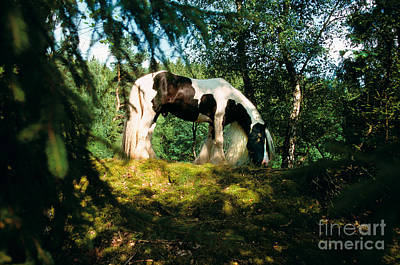 Tinker Horse Print by Gabriele Boiselle