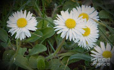 Aster Mixed Media - Tiny Daisies by Chalet Roome-Rigdon