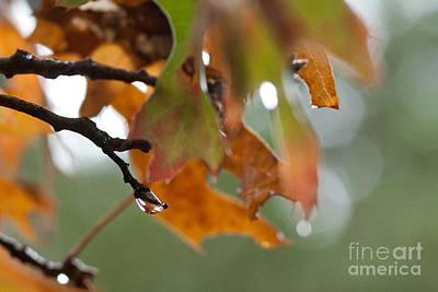 Tiny Leaf Print by Barbara Shallue