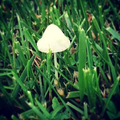 Fantasy Photograph - Tiny Mushroom In Grass #mushroom #grass by Marianna Mills