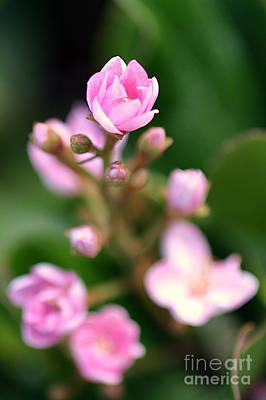 Nature Photograph - Tiny Pink by Henrik Lehnerer