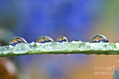 Tiny Waterworld And A Leaf Print by Heiko Koehrer-Wagner