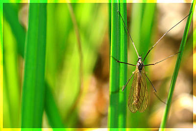 Spider Legs Mixed Media - Tipula by Toppart Sweden