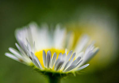 Flower Photograph - Tis But A Dream 2 by Steve Harrington