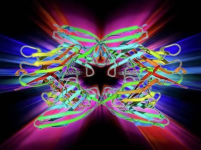 Molecular Structure Photograph - Titin Muscle Protein Molecule by Laguna Design