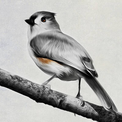 Titmouse Square Print by Bill Wakeley