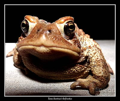 Toad Thinking What Do You Want Print by Rose Santuci-Sofranko