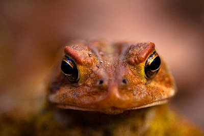 Toad Photograph - Toadally by Shane Holsclaw