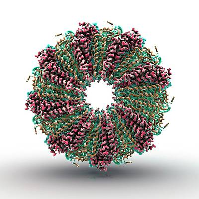 Tobacco Mosaic Virus Proteins Print by Animate4.com/science Photo Libary