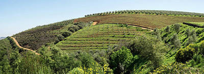 Tokara Vineyard, Delaire Graff Estate Print by Panoramic Images