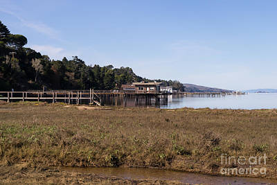 Contemplative Photograph - Tomales Bay At Inverness Point Reyes California Dsc2068 by Wingsdomain Art and Photography